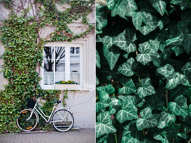 Rower i bluszcz na ulicy Wieniawskiego na Żoliborzu w Warszawie